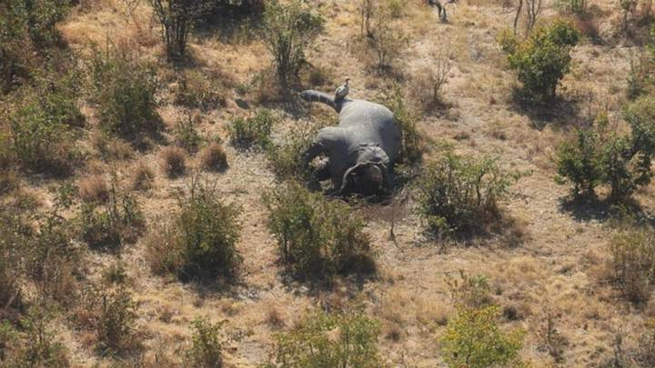 elefante-botswana