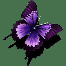 CB-Butterfly