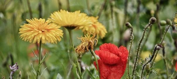 flowers-1912016_640