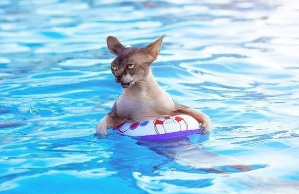 Как приучить кошку к купанию. Как приучить кошку к воде. Практические советы