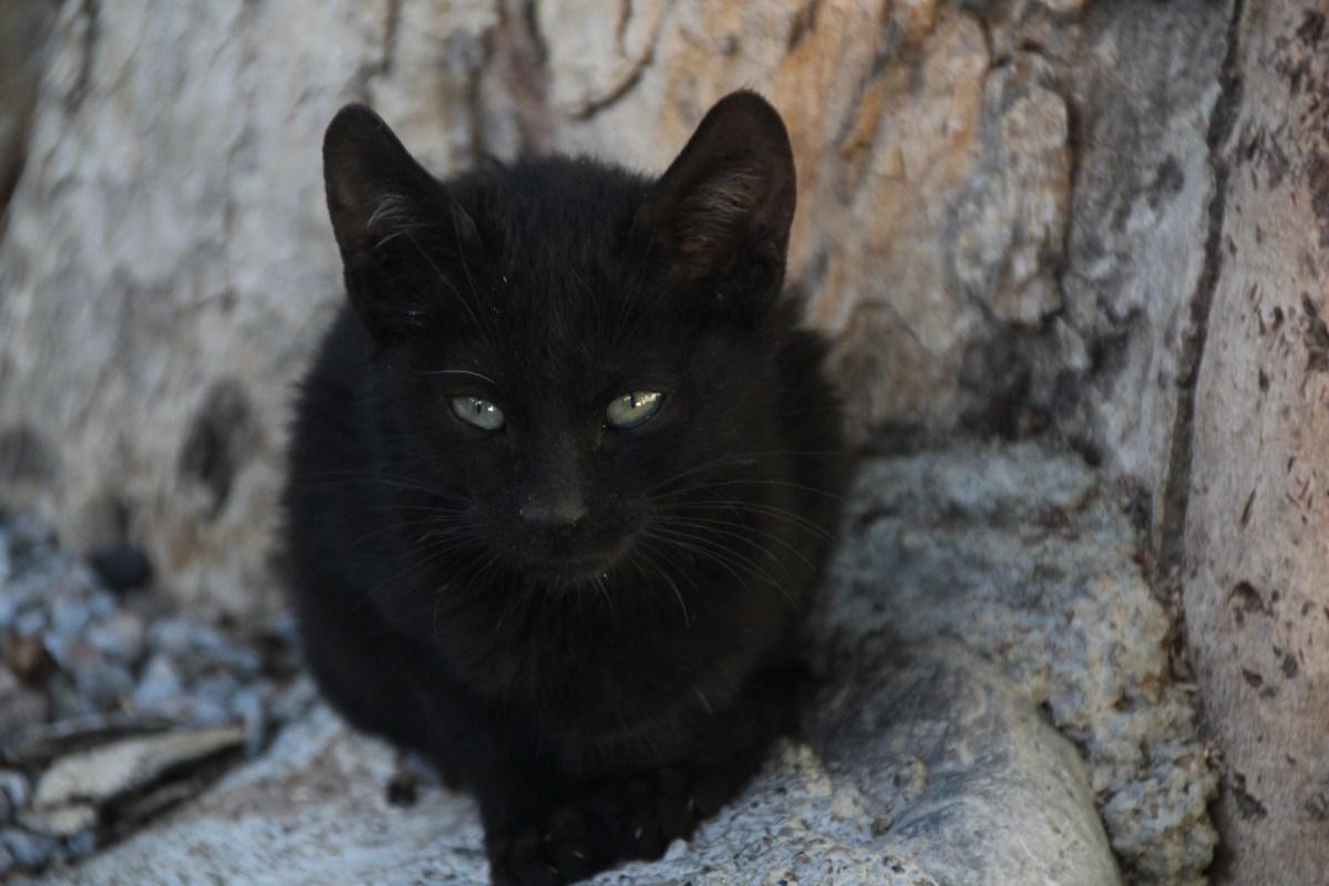 schwarze Katze sitzt auf Felsen - Kontakt zu Katzenberatung, Katzenverhalten, Tierpsychologie, Katzenpsychologie, Hilfe bei Problmen
