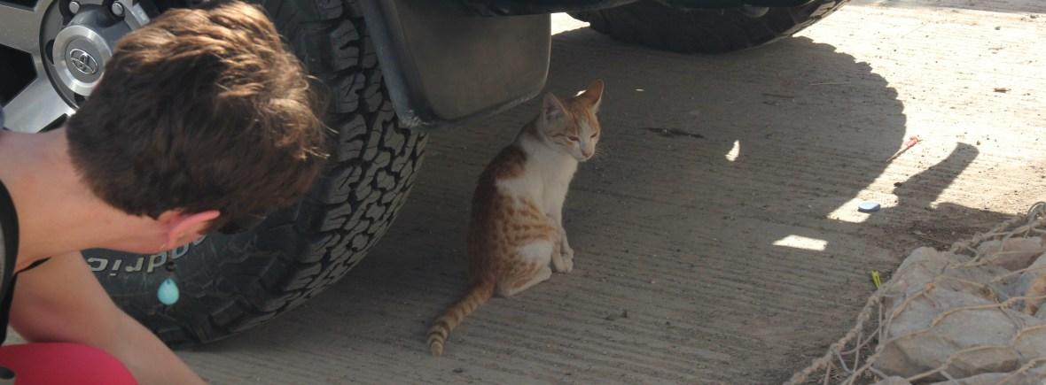 Katze sitzt unter Auto - Ausbildung Tierpsychologin, Katzenpsychologin, Katzenverhaltensberaterin, Beraterin zu Katzenverhalten