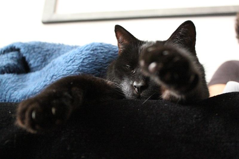 Schwarzer Kater liegt auf einer Couch
