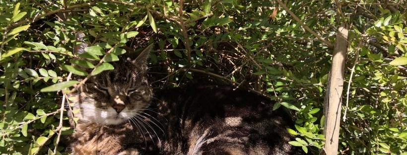 Eine Katze liegt im Schatten unter einem Busch