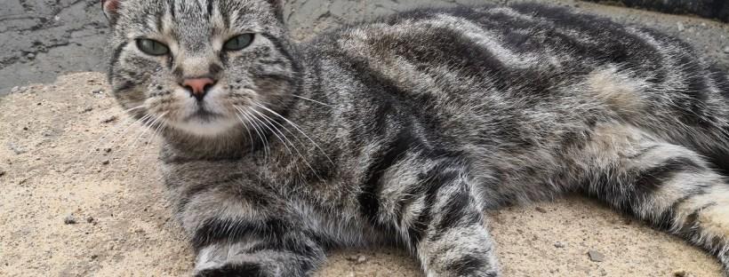 Getigerte Katze liegt auf Erde und schaut in die Kamera - Wohnungshaltung, Freigänger, Katzenberatung, Katzenverhaltensberatung, Probleme mit Katze, Haltung von Katzen in Wohnung
