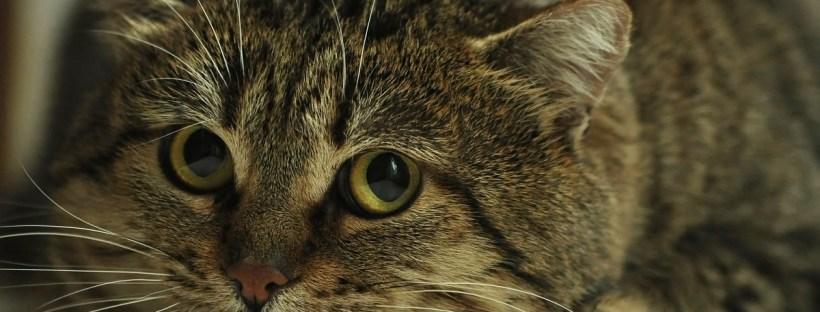 Katze kauert mit großen Augen auf dem Boden - Katzenberatung, Katzenverhaltensberatung, Katzenpsychologie Berlin, Katze erziehen, unsauber, macht daneben, Katzenklo, aggressiv