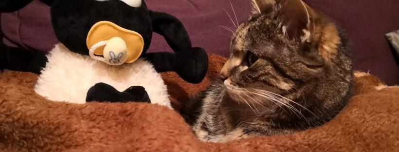Kuscheltier-Schaf mit Schnuller sitzt mit einer Katze auf einer Decke auf dem Sofa - Zusammenleben mit Katze und Kind, Katze und Kind vertragen sich nicht, wie kann ich meine Katze an mein Baby gewöhnen, Katzenberatung in Beratung, Katzenverhaltensberatung, Katzenpsychologie