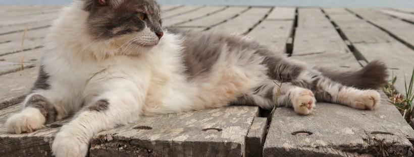 Katze liegt auf einem Holzsteg mit Meer im Hintergrund - Verreisen mit Katze, Katze mit in den Urlaub nehmen, Katzenberatung Berlin, Katzenpsychologin, Katzenpsychologie, Katzenverhaltensberatung, ängstliche, versteckt sich, macht neben katzenklo, verstehen sich nicht mehr