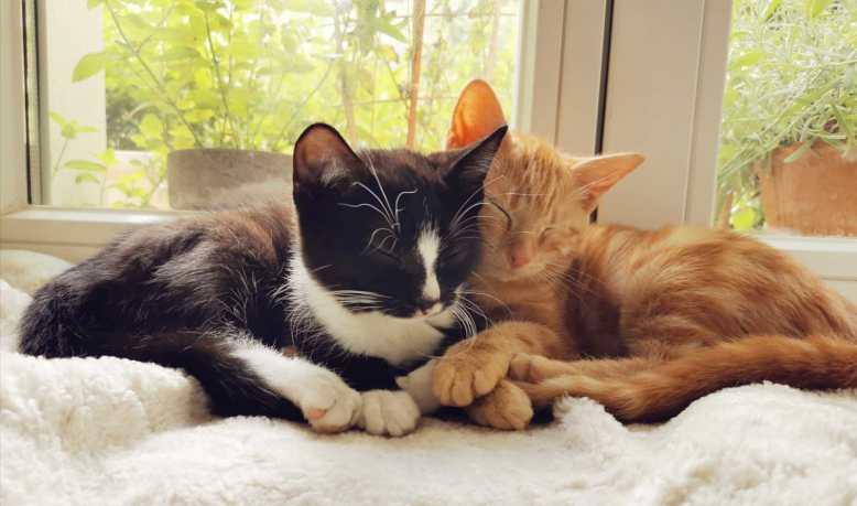 Zwei Katzen kuscheln auf der Fensterbank - Katzen glücklich vergesellschaftet in Berlin, Katzenberatung, Katzenverhaltensberatung, Katzentraining, Clicker Training, Katzenpsychologe, Katzenpsychologin, Katzentrainerin, zu zweit nicht alleine, zusammenführen, vergesellschaften