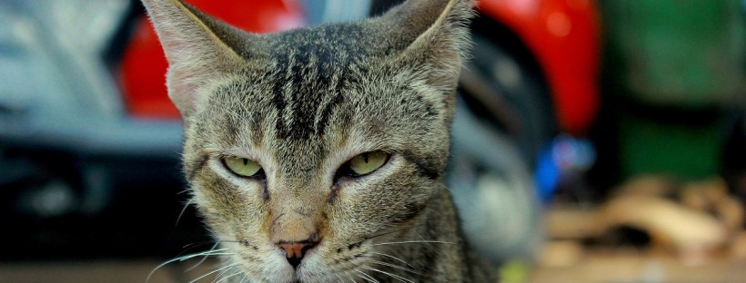 Getigerte Katze schaut böse in die Kamera - Protestpinkeln, Katze Toilette, Katzenklo, unsauber, macht daneben, markiert, Urin, Katzenberatung Berlin, Katzenverhaltensberatung, Katzenpsychologie, Katzenpsychologin, Katzenpsychologe, Katzentraining