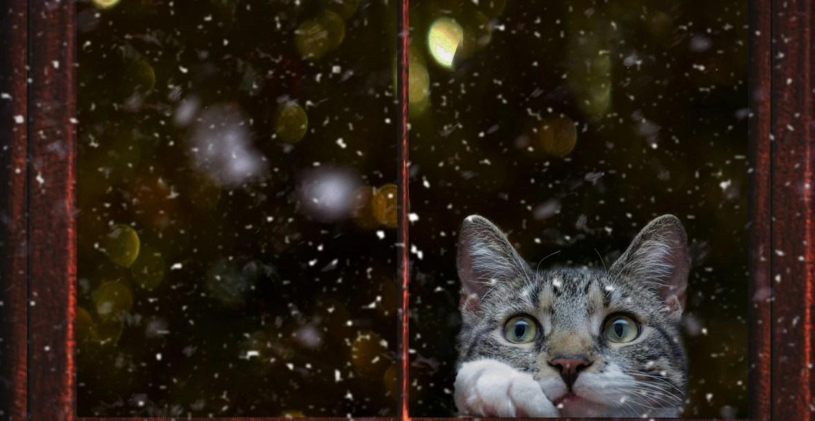 getigerte Katze sieht durch ein Fenster nach draußen auf Schneeflocken - katzenpsychologie, katzenpsychologin, katzenberatung, katzenverhaltensberatung, katzenpsychologin, berlin, aggressiv, unsauber, stubenrein, streit, kämpfen