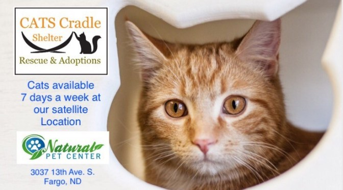 adoptable cats 7 days a week!