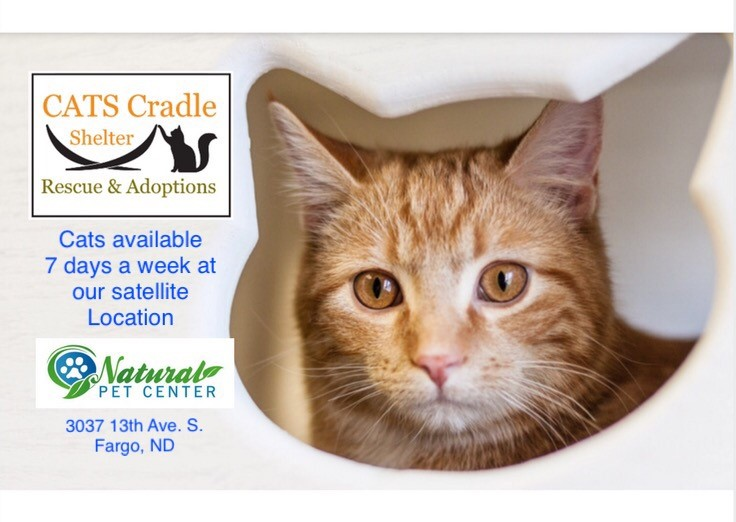 Adoptable Cats 7 Days A Week