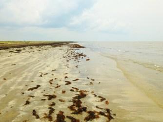 Lots of seaweed.