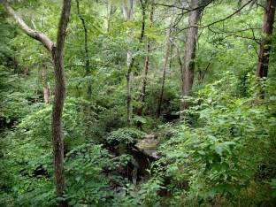 Stone ledge on Baines Creek Trail