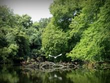 Heron flying away on Navasota River