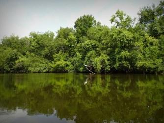 Navasota River bank