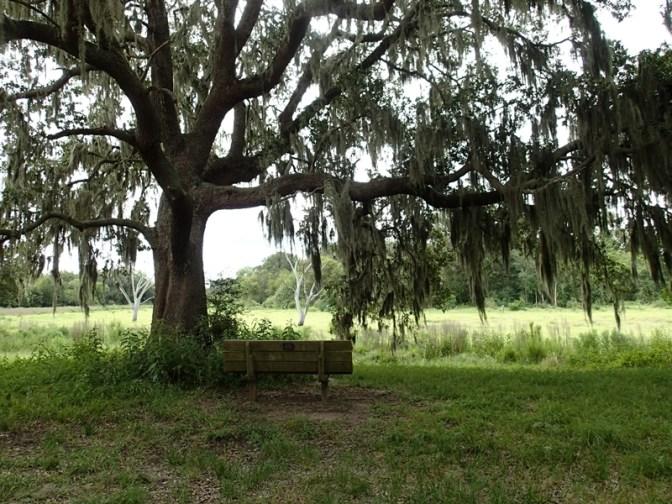 Lunch spot under tree.