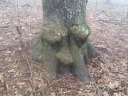This tree looks like a sleepy old man!