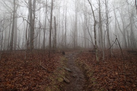 Fog. Somewhere.