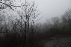 Foggy view from Springer Mountain. Booooo!