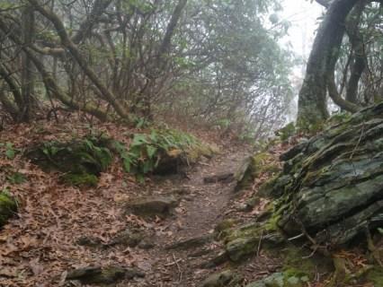 Trail. Somewhere.
