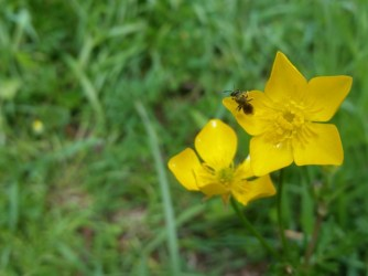 Yellow With Insect