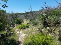 Trail with cactus and yucca.