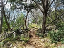 Trees and shadows on the Spicewood Canyon Trail.