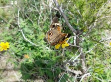 Butterfly with its wings spread.