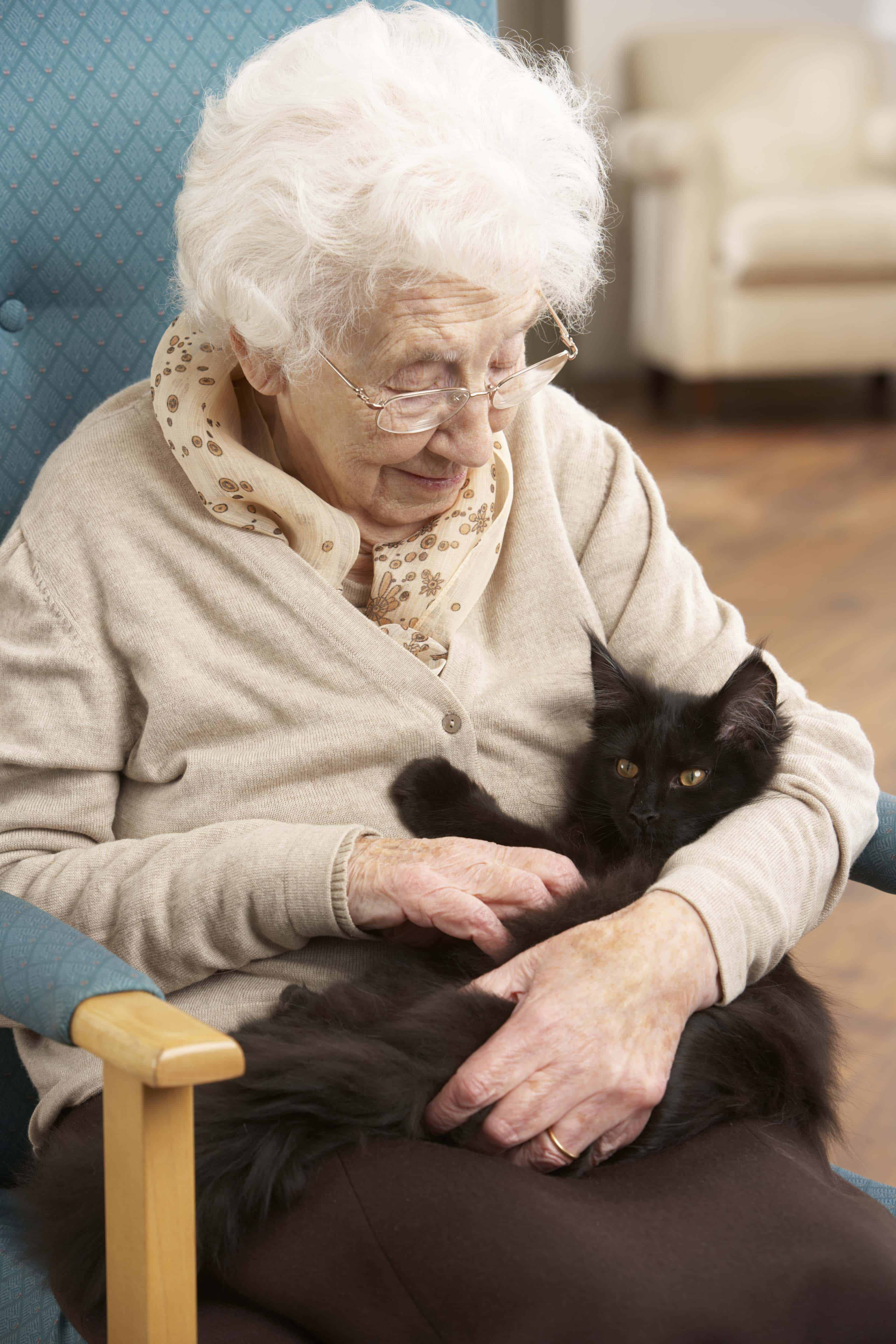 senior citizen chair cover rental omaha blog the change helping seniors care for pets cats herd you