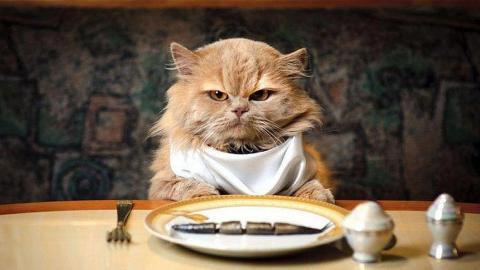Почему кошка вялая все время спит и мало ест