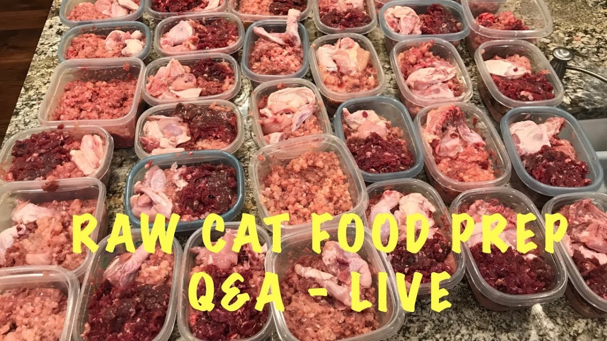 Raw cat food prep with qa cat shop online forumfinder Choice Image