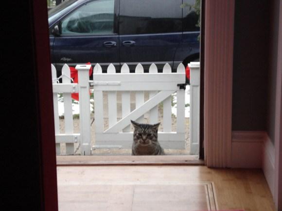 Hi. So I heard you like cats.