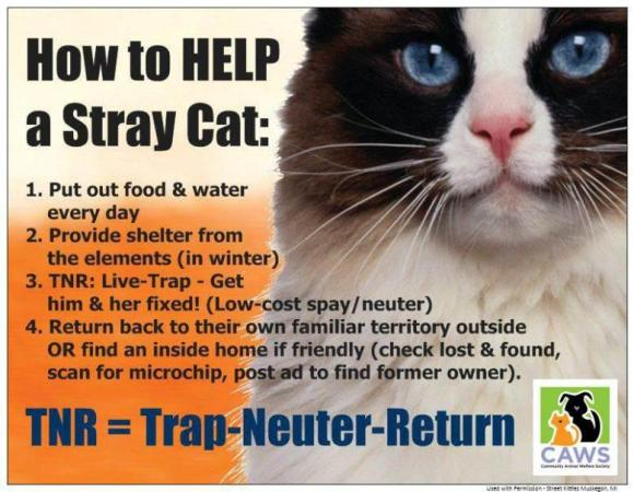 How to Help a Stray Cat
