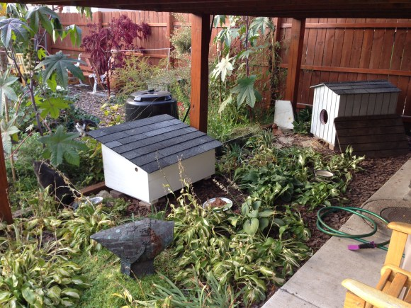 new outdoor cat house
