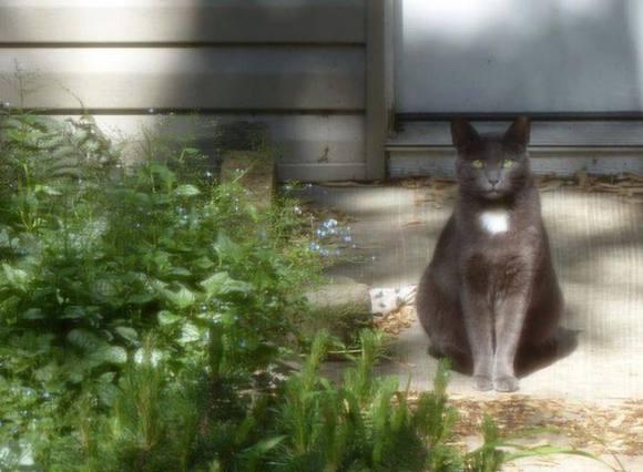 Kitty in her caretaker's backyard.