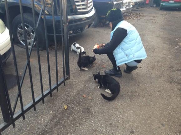 George feeding the cats