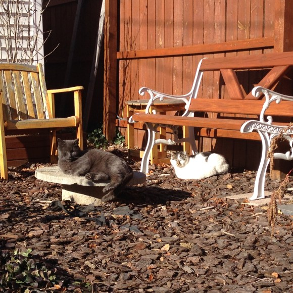 Dash and Funny Face lounge on the catio even in the winter.