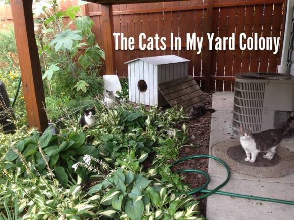 The Cats In My Yard Colony