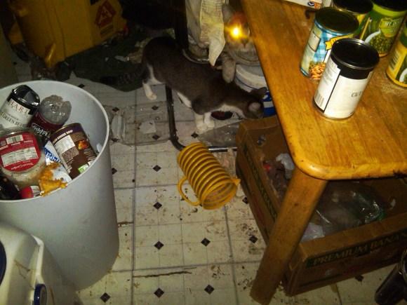 hoarder kitchen