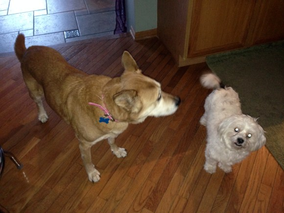 Kim's dogs