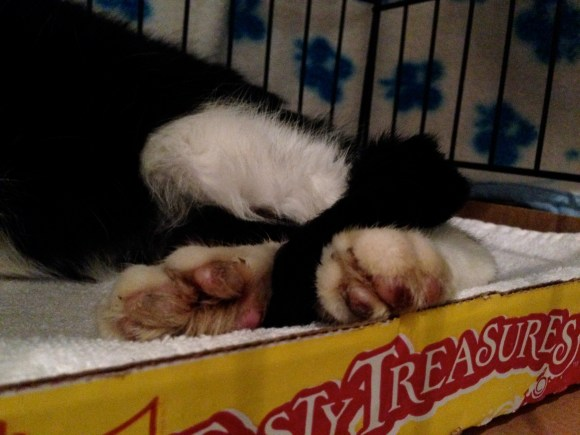 Munkimo's paws