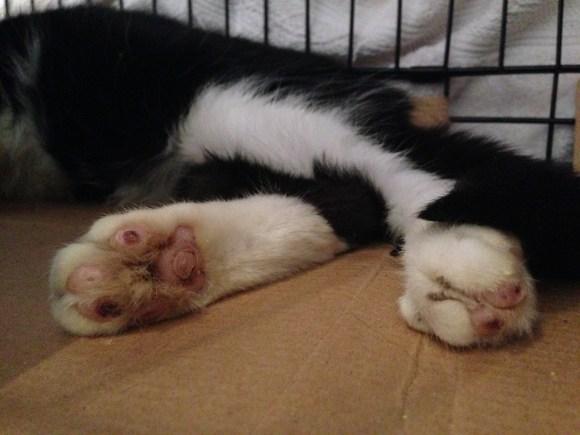 Munkimo's healing paws