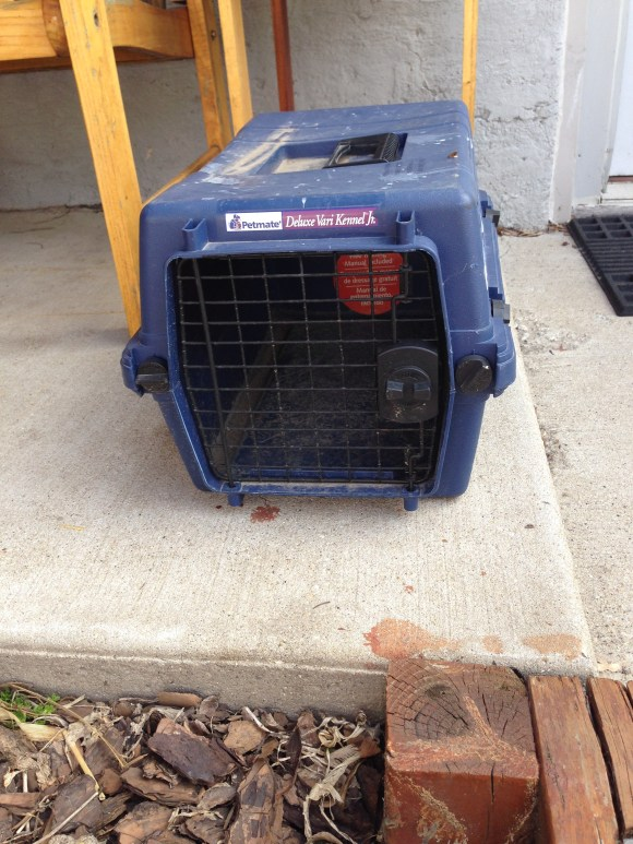 found pet carrier