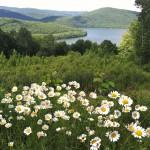 Summertime vista (courtesy of Lillian Browne)
