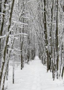 ART winter