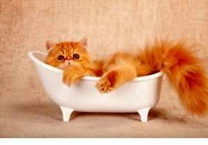 kitten in tub