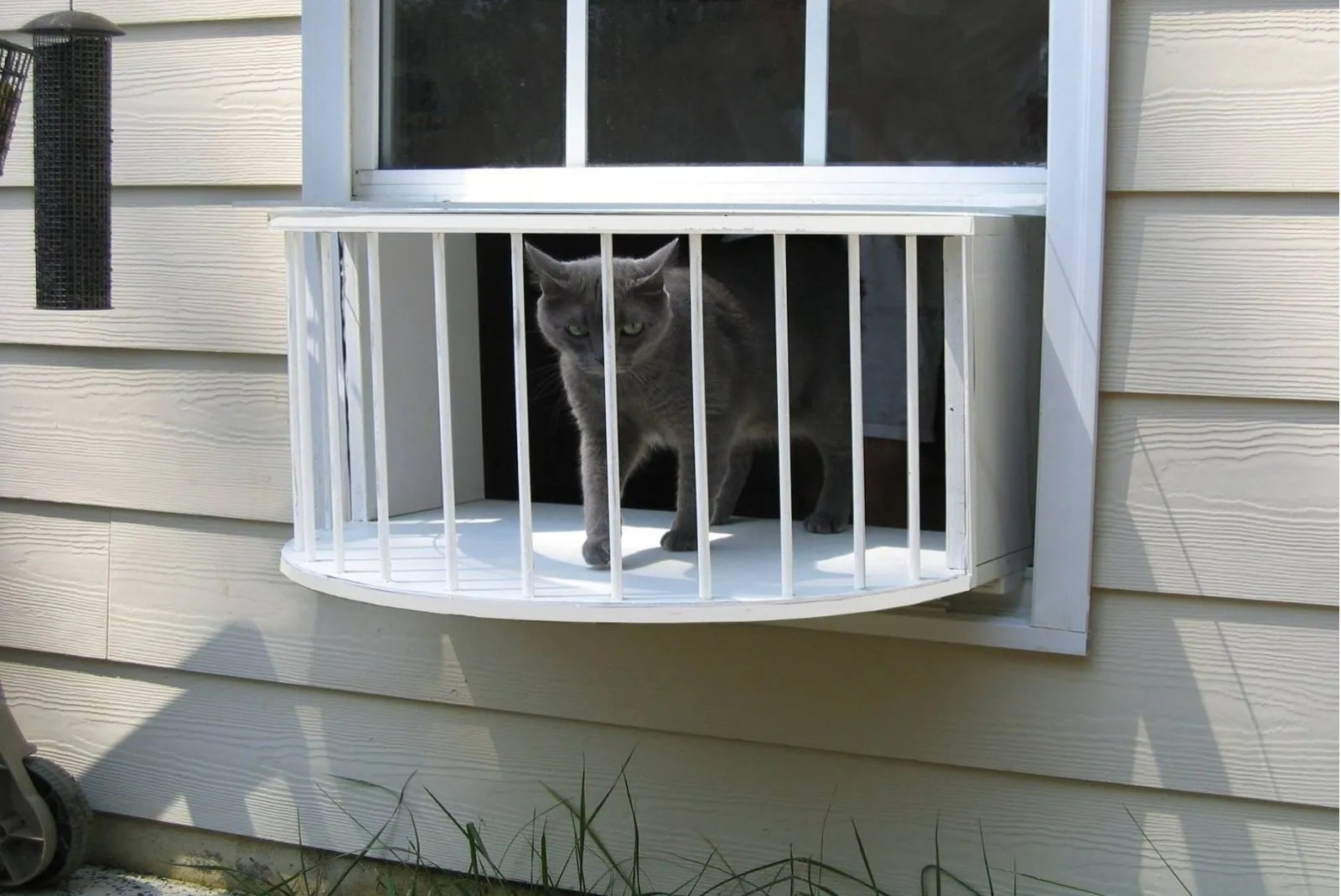 Cat Window Perch
