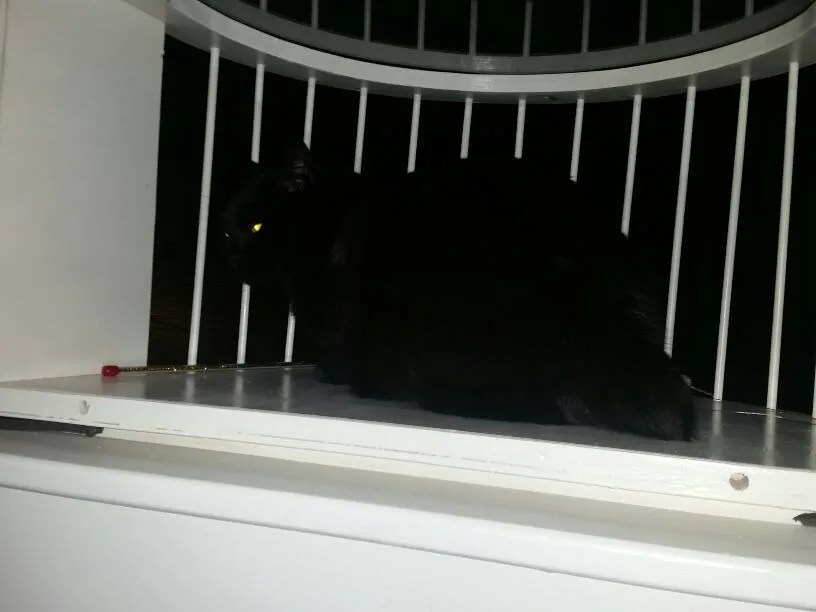 Paducah, KY Cat Solarium Owner